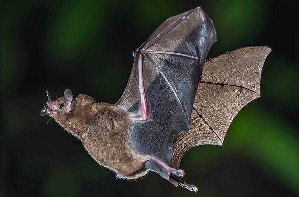 Животные-Новой-Зеландии-Описание-названия-виды-и-фото-животных-Новой-Зеландии-34