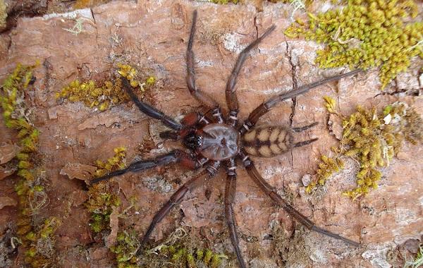 Животные-Новой-Зеландии-Описание-названия-виды-и-фото-животных-Новой-Зеландии-36