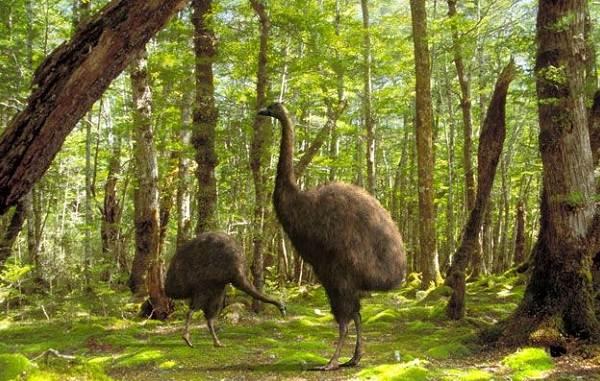 Животные-Новой-Зеландии-Описание-названия-виды-и-фото-животных-Новой-Зеландии-4