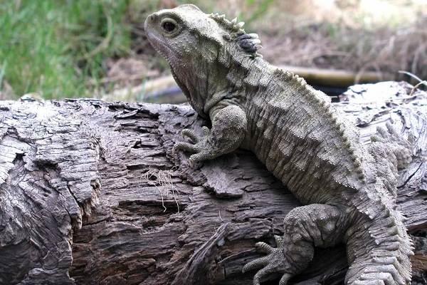 Животные-Новой-Зеландии-Описание-названия-виды-и-фото-животных-Новой-Зеландии-7
