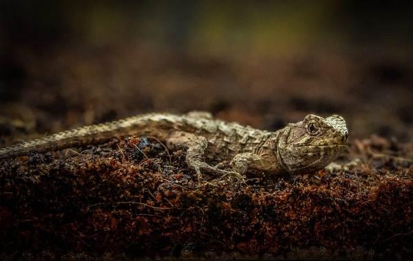Животные-Новой-Зеландии-Описание-названия-виды-и-фото-животных-Новой-Зеландии-8