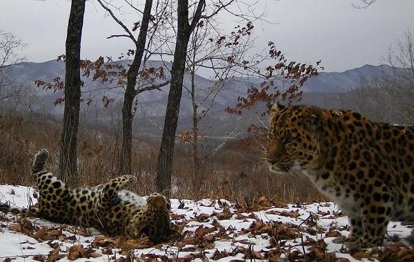 Животные-Приморского-края-Описание-названия-виды-и-фото-животных-Приморского-края-1