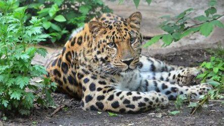 Животные Приморского края. Описание, названия, виды и фото животных Приморского края
