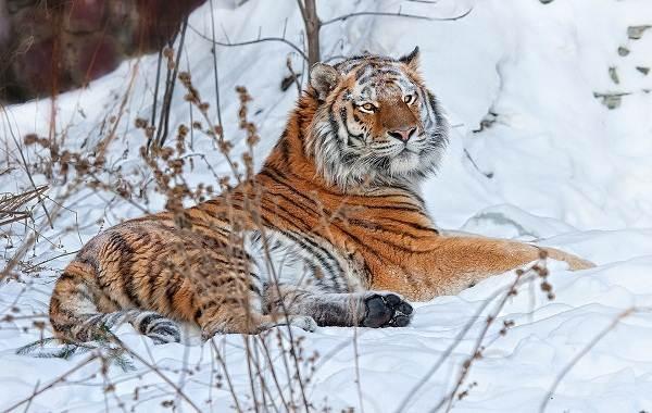 Животные-Приморского-края-Описание-названия-виды-и-фото-животных-Приморского-края-3