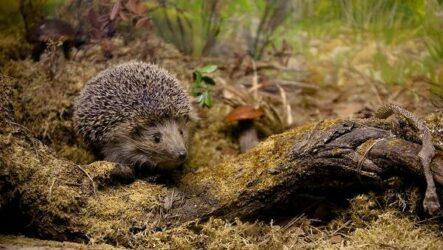 Животные Ставропольского края. Описание, названия и виды животных Ставропольского края