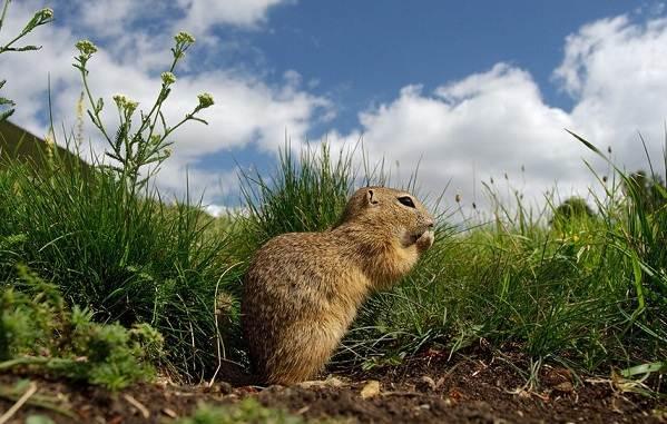Животные-Ставропольского-края-Описание-названия-и-виды-животных-Ставропольского-края-6