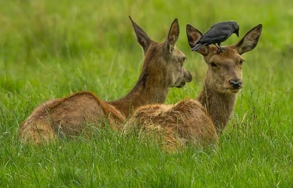 Животные-Ставропольского-края-Описание-названия-и-виды-животных-Ставропольского-края-7