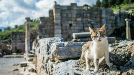 Животные Турции. Описание, названия, виды и фото животных Турции