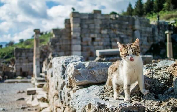 Животные-Турции-Описание-названия-виды-и-фото-животных-Турции-1