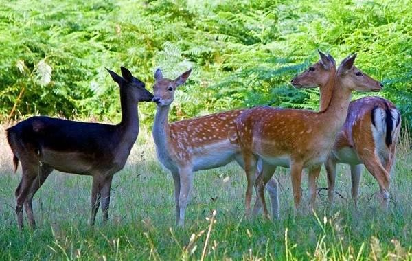 Животные-Турции-Описание-названия-виды-и-фото-животных-Турции-16