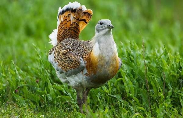 Животные-Турции-Описание-названия-виды-и-фото-животных-Турции-28