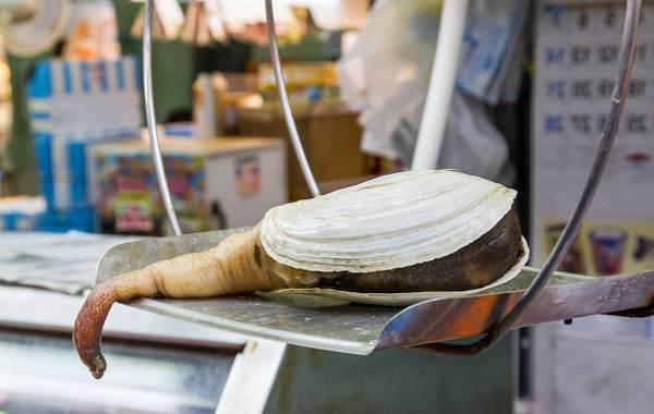 Гуидак-моллюск-Описание-особенности-виды-образ-жизни-и-среда-обитания-гуидака-7