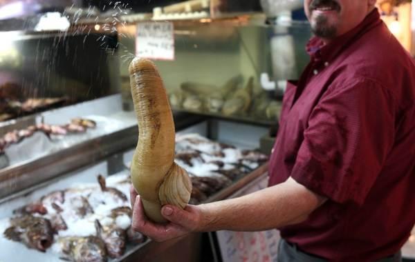 Гуидак-моллюск-Описание-особенности-виды-образ-жизни-и-среда-обитания-гуидака-9
