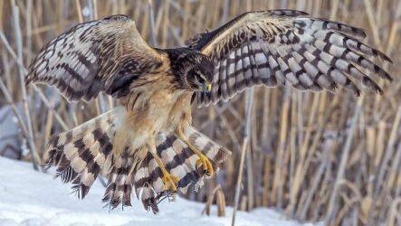Хищные птицы. Названия, описание, классификация и фото хищных птиц