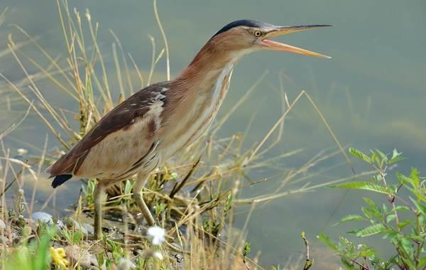 Хищные-птицы-Названия-описание-классификация-и-фото-хищных-птиц-29