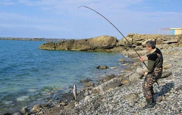 Кутум-рыба-Описание-особенности-виды-образ-жизни-и-среда-обитания-кутума-8
