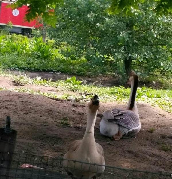 PRAGUEZOO-пражский-зоопарк-Виды-животных-и-рекомендации-для-посетителей-зоопарка-13