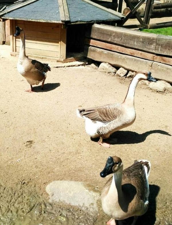 PRAGUEZOO-пражский-зоопарк-Виды-животных-и-рекомендации-для-посетителей-зоопарка-14