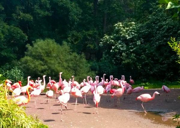 PRAGUEZOO-пражский-зоопарк-Виды-животных-и-рекомендации-для-посетителей-зоопарка-17