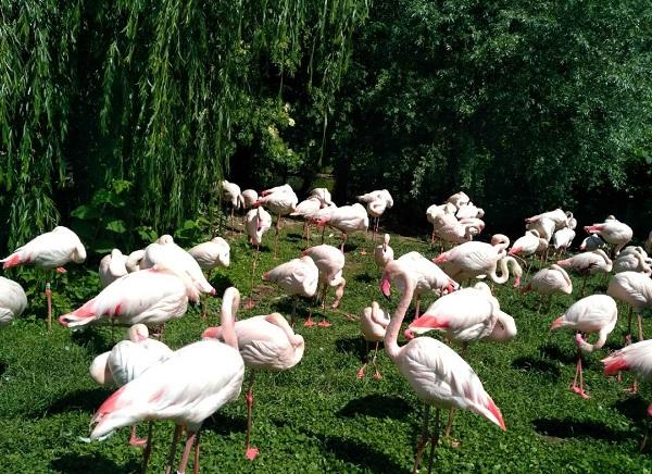 PRAGUEZOO-пражский-зоопарк-Виды-животных-и-рекомендации-для-посетителей-зоопарка-18