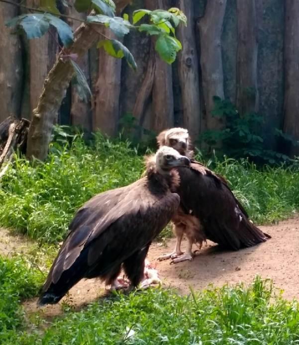 PRAGUEZOO-пражский-зоопарк-Виды-животных-и-рекомендации-для-посетителей-зоопарка-19