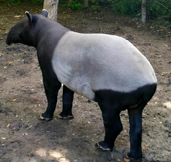 PRAGUEZOO-пражский-зоопарк-Виды-животных-и-рекомендации-для-посетителей-зоопарка-20