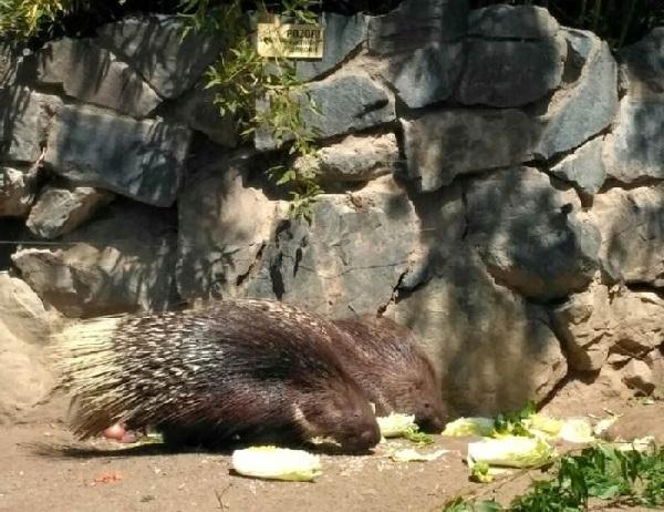 PRAGUEZOO-пражский-зоопарк-Виды-животных-и-рекомендации-для-посетителей-зоопарка-21