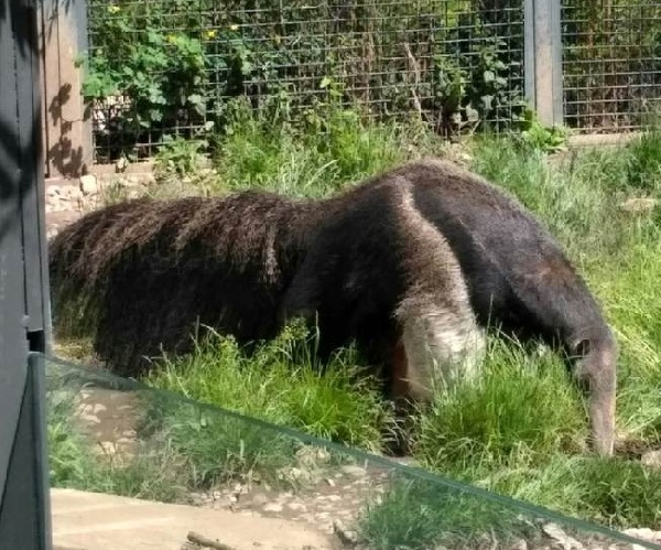PRAGUEZOO-пражский-зоопарк-Виды-животных-и-рекомендации-для-посетителей-зоопарка-22