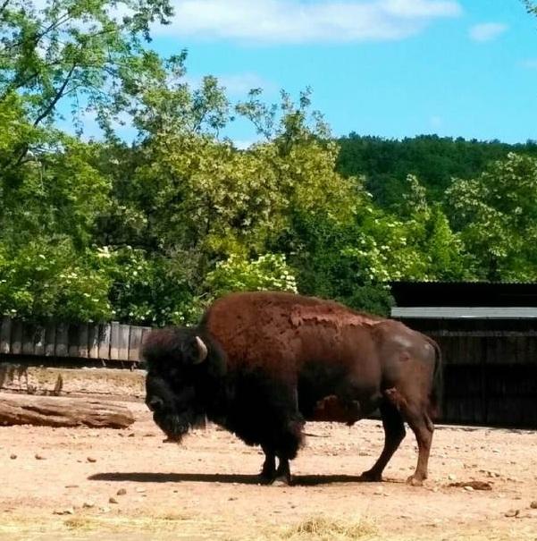 PRAGUEZOO-пражский-зоопарк-Виды-животных-и-рекомендации-для-посетителей-зоопарка-23