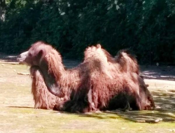 PRAGUEZOO-пражский-зоопарк-Виды-животных-и-рекомендации-для-посетителей-зоопарка-24