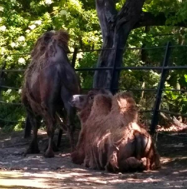 PRAGUEZOO-пражский-зоопарк-Виды-животных-и-рекомендации-для-посетителей-зоопарка-25
