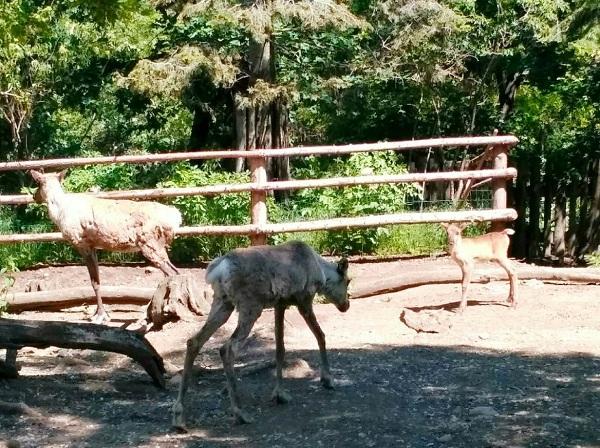 PRAGUEZOO-пражский-зоопарк-Виды-животных-и-рекомендации-для-посетителей-зоопарка-27