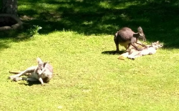 PRAGUEZOO-пражский-зоопарк-Виды-животных-и-рекомендации-для-посетителей-зоопарка-28