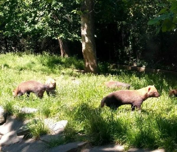 PRAGUEZOO-пражский-зоопарк-Виды-животных-и-рекомендации-для-посетителей-зоопарка-30