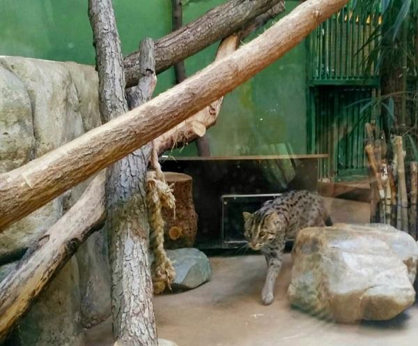 PRAGUEZOO-пражский-зоопарк-Виды-животных-и-рекомендации-для-посетителей-зоопарка-31