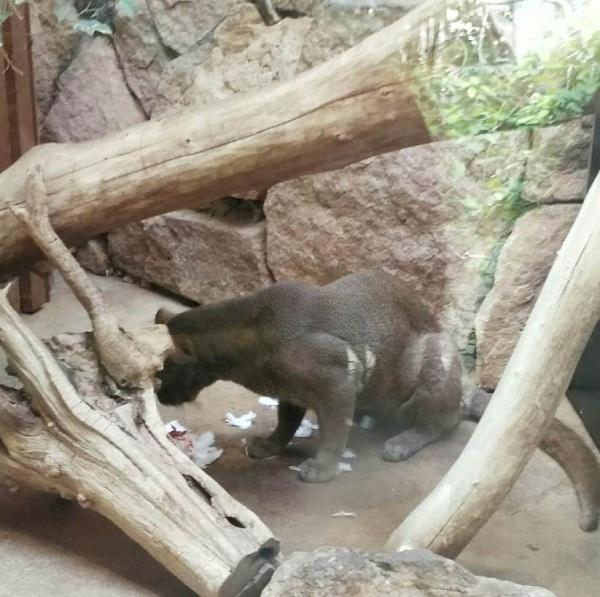 PRAGUEZOO-пражский-зоопарк-Виды-животных-и-рекомендации-для-посетителей-зоопарка-33