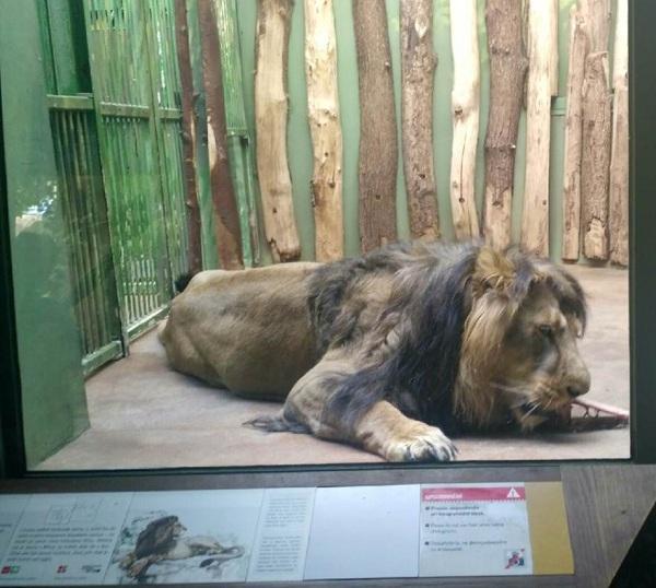 PRAGUEZOO-пражский-зоопарк-Виды-животных-и-рекомендации-для-посетителей-зоопарка-34