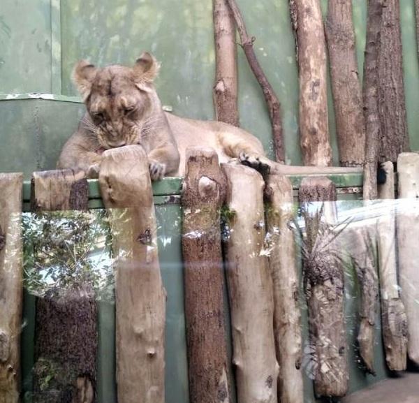 PRAGUEZOO-пражский-зоопарк-Виды-животных-и-рекомендации-для-посетителей-зоопарка-36