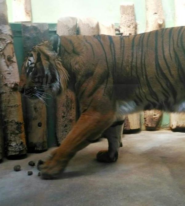 PRAGUEZOO-пражский-зоопарк-Виды-животных-и-рекомендации-для-посетителей-зоопарка-38