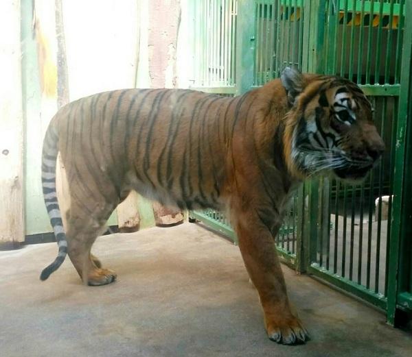 PRAGUEZOO-пражский-зоопарк-Виды-животных-и-рекомендации-для-посетителей-зоопарка-39