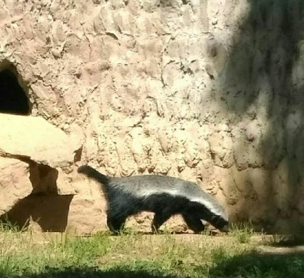 PRAGUEZOO-пражский-зоопарк-Виды-животных-и-рекомендации-для-посетителей-зоопарка-41