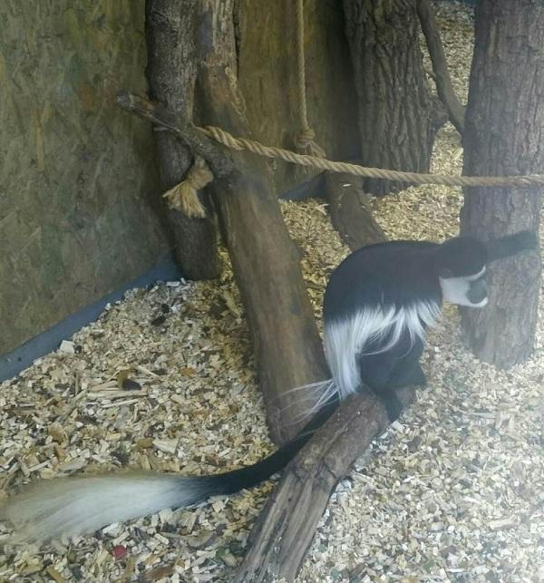 PRAGUEZOO-пражский-зоопарк-Виды-животных-и-рекомендации-для-посетителей-зоопарка-42