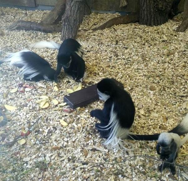 PRAGUEZOO-пражский-зоопарк-Виды-животных-и-рекомендации-для-посетителей-зоопарка-43