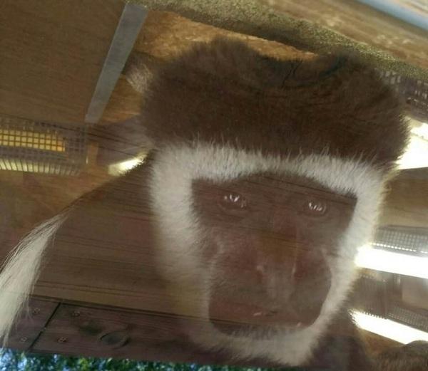 PRAGUEZOO-пражский-зоопарк-Виды-животных-и-рекомендации-для-посетителей-зоопарка-44