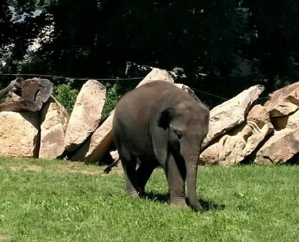 PRAGUEZOO-пражский-зоопарк-Виды-животных-и-рекомендации-для-посетителей-зоопарка-47