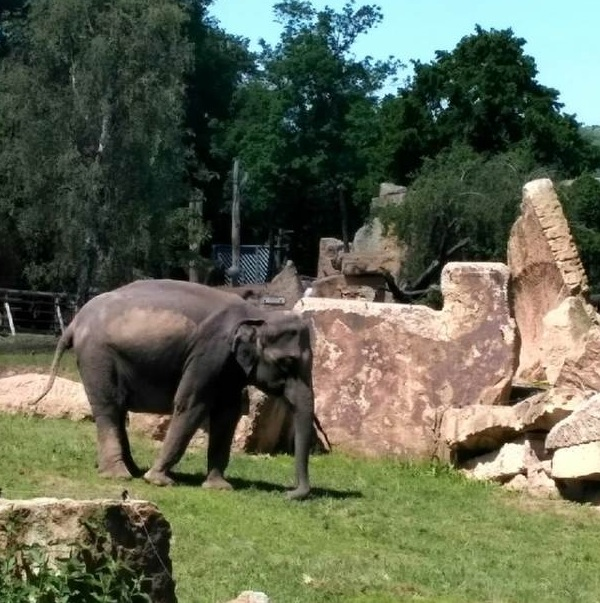 PRAGUEZOO-пражский-зоопарк-Виды-животных-и-рекомендации-для-посетителей-зоопарка-48