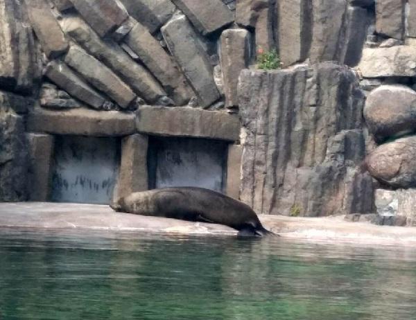 PRAGUEZOO-пражский-зоопарк-Виды-животных-и-рекомендации-для-посетителей-зоопарка-5