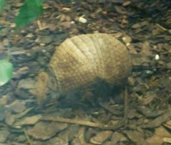 PRAGUEZOO-пражский-зоопарк-Виды-животных-и-рекомендации-для-посетителей-зоопарка-50
