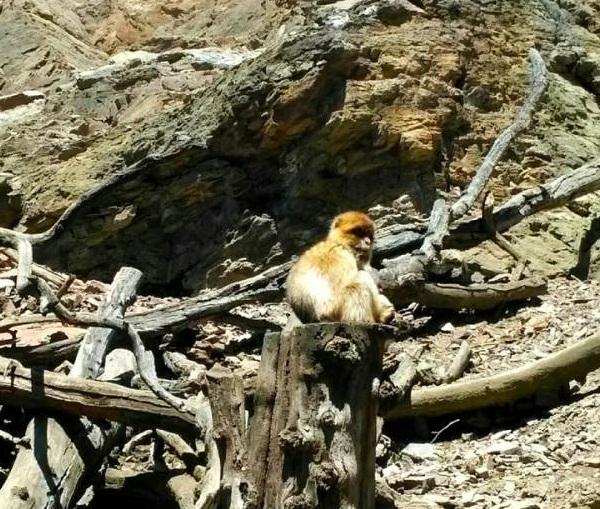 PRAGUEZOO-пражский-зоопарк-Виды-животных-и-рекомендации-для-посетителей-зоопарка-52