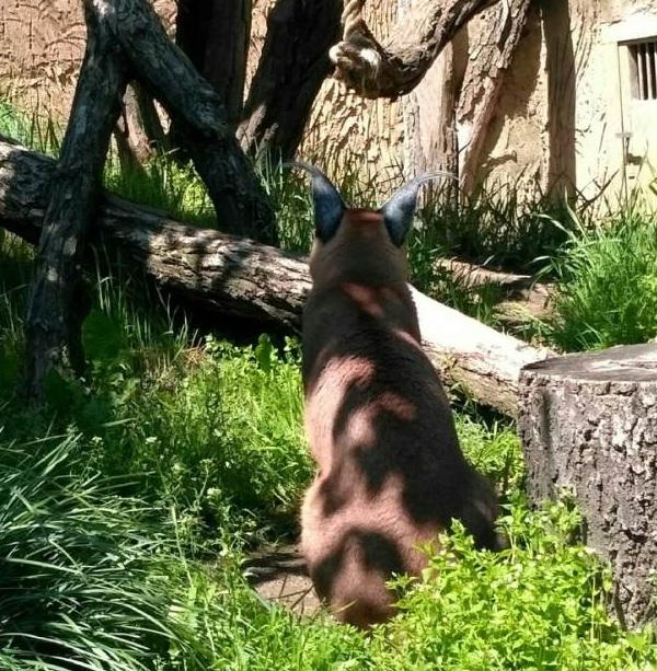 PRAGUEZOO-пражский-зоопарк-Виды-животных-и-рекомендации-для-посетителей-зоопарка-53